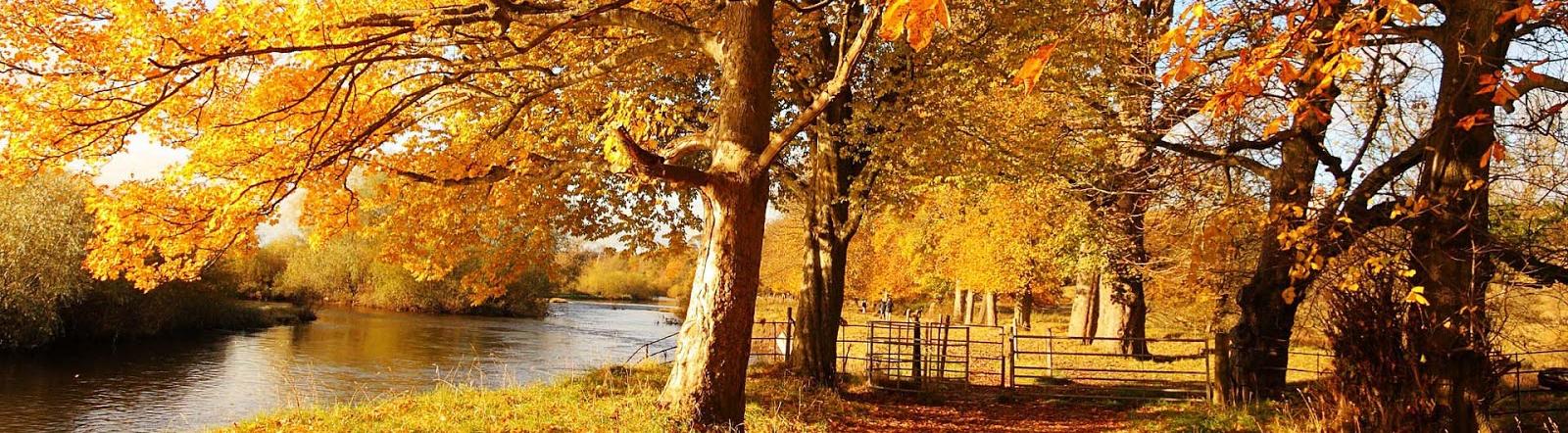 hd-herfst-achtergronden-foto-met-een-riviertje-en-bomen-met-herfstbladeren-hd-herfst-wallpapers-1600x442
